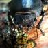 Platusis elniavabalis - Dorcus parallelipipedus | Fotografijos autorius : Oskaras Venckus | © Macrogamta.lt | Šis tinklapis priklauso bendruomenei kuri domisi makro fotografija ir fotografuoja gyvąjį makro pasaulį.