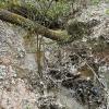 Ąžuolyno bevardis upelis | Fotografijos autorius : Gintautas Steiblys | © Macrogamta.lt | Šis tinklapis priklauso bendruomenei kuri domisi makro fotografija ir fotografuoja gyvąjį makro pasaulį.