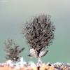 Gleivūnas - Lamproderma sp. | Fotografijos autorius : Vytautas Tamutis | © Macrogamta.lt | Šis tinklapis priklauso bendruomenei kuri domisi makro fotografija ir fotografuoja gyvąjį makro pasaulį.