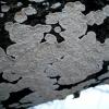 Apskritasis spindulenis -  Xylodon radula | Fotografijos autorius : Aleksandras Stabrauskas | © Macrogamta.lt | Šis tinklapis priklauso bendruomenei kuri domisi makro fotografija ir fotografuoja gyvąjį makro pasaulį.