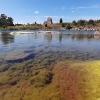 Bomarsundo tvirtovės liekanos   Fotografijos autorius : Gintautas Steiblys   © Macrogamta.lt   Šis tinklapis priklauso bendruomenei kuri domisi makro fotografija ir fotografuoja gyvąjį makro pasaulį.
