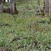 Girinė tulpė - Tulipa sylvestris | Fotografijos autorius : Nomeda Vėlavičienė | © Macrogamta.lt | Šis tinklapis priklauso bendruomenei kuri domisi makro fotografija ir fotografuoja gyvąjį makro pasaulį.