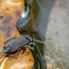 Irklablakė | Fotografijos autorius : Vidas Brazauskas | © Macrogamta.lt | Šis tinklapis priklauso bendruomenei kuri domisi makro fotografija ir fotografuoja gyvąjį makro pasaulį.