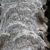 Minkštoji urvuotė - Datronia mollis | Fotografijos autorius : Vytautas Gluoksnis | © Macrogamta.lt | Šis tinklapis priklauso bendruomenei kuri domisi makro fotografija ir fotografuoja gyvąjį makro pasaulį.