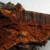 Plokščiasis blizgutis - Ganoderma applanatum | Fotografijos autorius : Aleksandras Stabrauskas | © Macrogamta.lt | Šis tinklapis priklauso bendruomenei kuri domisi makro fotografija ir fotografuoja gyvąjį makro pasaulį.