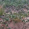 Rūdninkų poligono oazės | Fotografijos autorius : Gintautas Steiblys | © Macrogamta.lt | Šis tinklapis priklauso bendruomenei kuri domisi makro fotografija ir fotografuoja gyvąjį makro pasaulį.