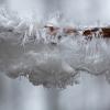 Sklaidžioji vaškaplutė - Exidiopsis effusa | Fotografijos autorius : Zita Gasiūnaitė | © Macrogamta.lt | Šis tinklapis priklauso bendruomenei kuri domisi makro fotografija ir fotografuoja gyvąjį makro pasaulį.