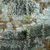 Rusvoji skyvytė - Lecidella elaeochroma (?) | Fotografijos autorius : Aleksandras Stabrauskas | © Macrogamta.lt | Šis tinklapis priklauso bendruomenei kuri domisi makro fotografija ir fotografuoja gyvąjį makro pasaulį.