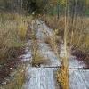 Trako miško pažintinis takas pelkėje | Fotografijos autorius : Gintautas Steiblys | © Macrogamta.lt | Šis tinklapis priklauso bendruomenei kuri domisi makro fotografija ir fotografuoja gyvąjį makro pasaulį.
