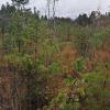 Trako miško tarpinė pelkė | Fotografijos autorius : Gintautas Steiblys | © Macrogamta.lt | Šis tinklapis priklauso bendruomenei kuri domisi makro fotografija ir fotografuoja gyvąjį makro pasaulį.
