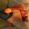 Kanapėtasis spragšis - Agrypnus murinus, lerva  | Fotografijos autorius : Ramunė Vakarė | © Macrogamta.lt | Šis tinklapis priklauso bendruomenei kuri domisi makro fotografija ir fotografuoja gyvąjį makro pasaulį.